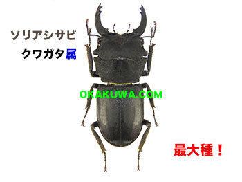 20201206a.jp