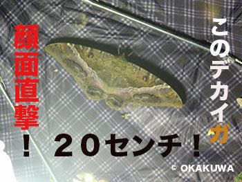 20210220b.jpg