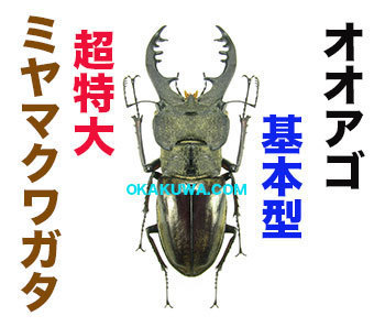 20210318a.jp